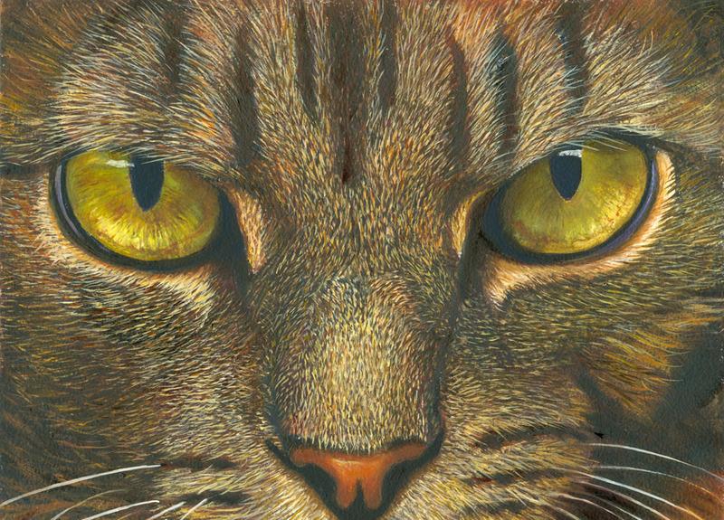 Dibujo De Gato En Pinturas De Gato Arte Con | m 225 s de